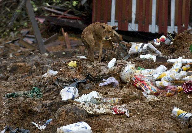 A stray dog rummages for food among debris in La Pintada