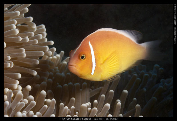 A new look at coral reefs