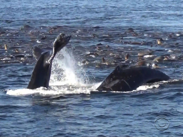 whales_monterey.jpg