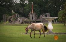 Cumberland Island: Where nature feels large