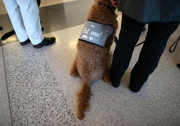 """""""Wag Brigade"""" at San Francisco airport"""