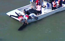 Rescuers race to save beached whales in Fla.