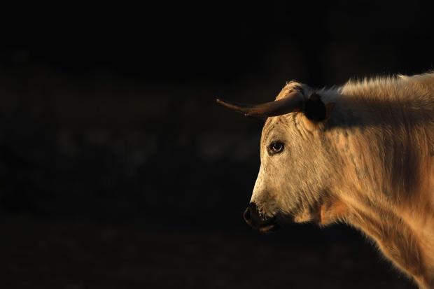 Top animal photos of 2013