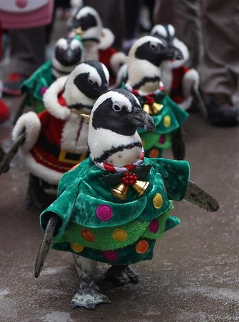 Christmas penguins on parade
