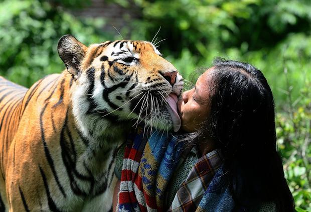 My best friend, the tiger