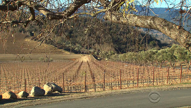 vineyards-california-two.jpg