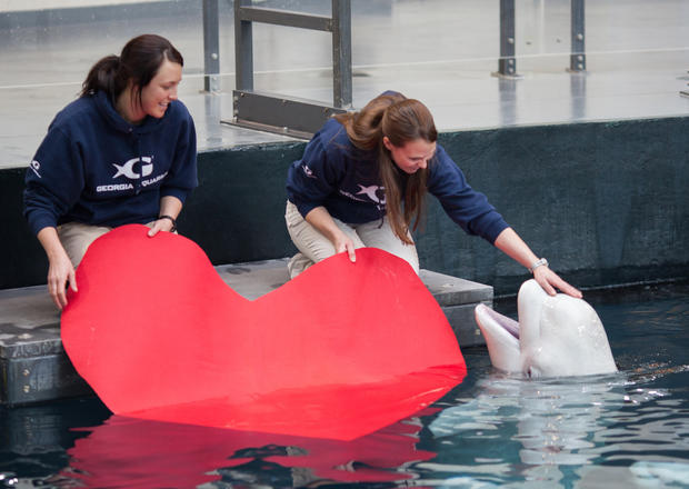 Valentine's Day at the aquarium