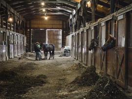 horse-rescue-2.jpg