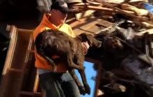 Washington mudslide family dog rescued