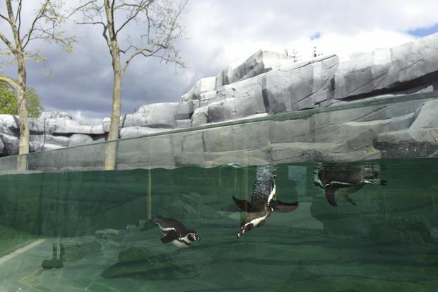 Paris zoo reopens