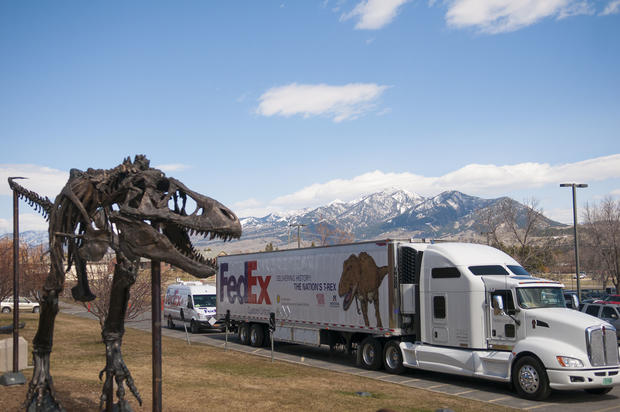 T. rex arrives in Washington