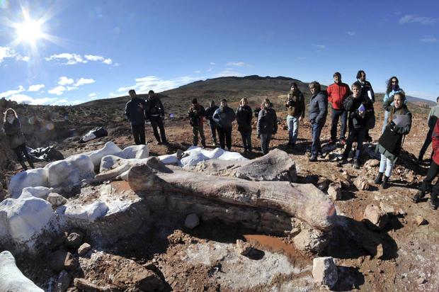 Largest ever set of dinosaur remains