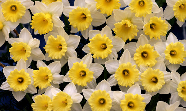 Flowers galore in Chelsea, London