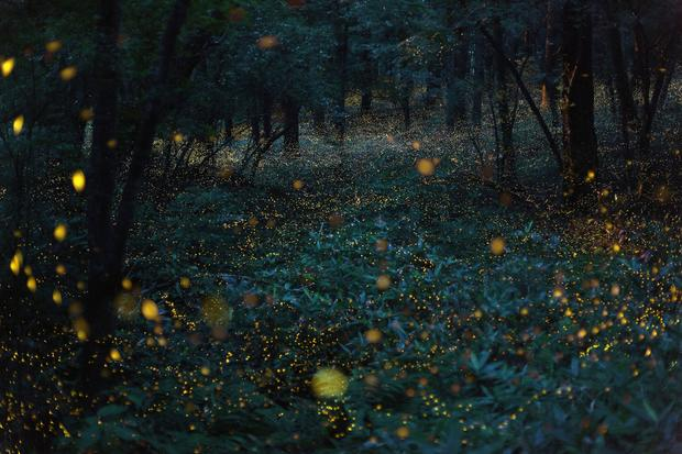 Photographer captures magical nighttime landscapes