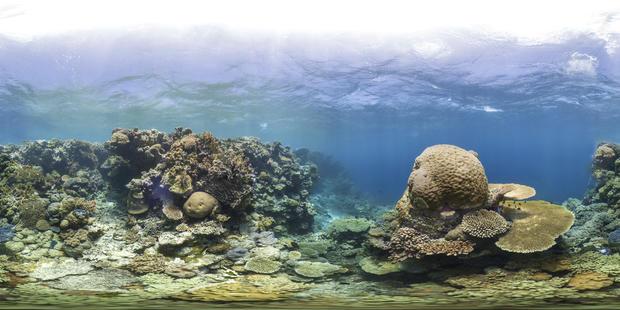 Underwater photos from UNESCO World Heritage Marine Sites