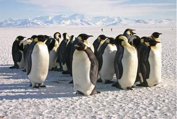 emperor-penguins74988web.jpg