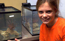 Sixth grader credited with scientific breakthrough on lionfish