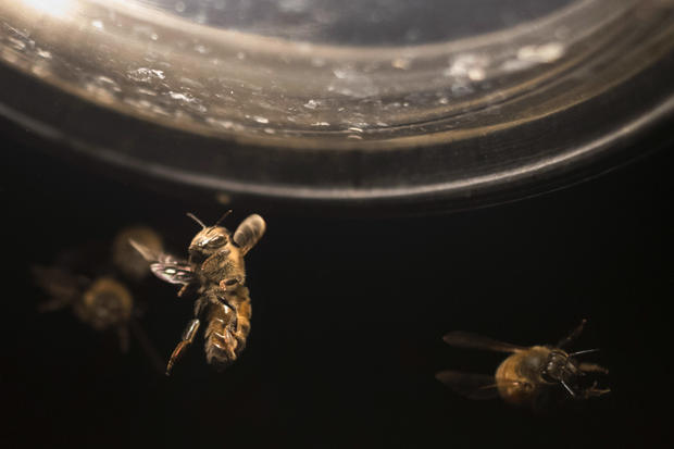 Bringing the bees