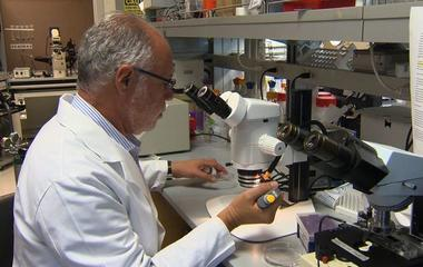 New gene therapy procedure could provide pacemaker alternative
