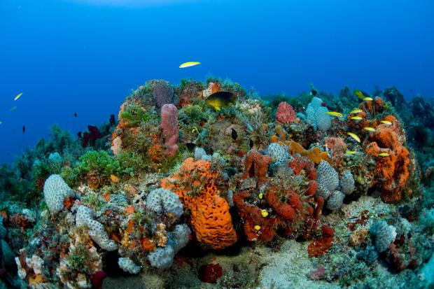 coral-reef-newscom-nhpaphotos074072.jpg
