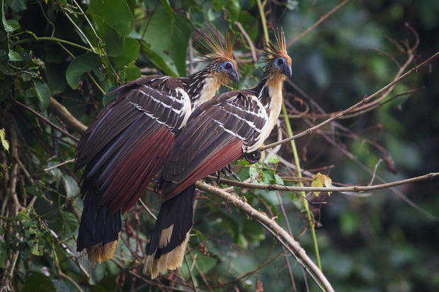 Animals of the Peruvian Amazon