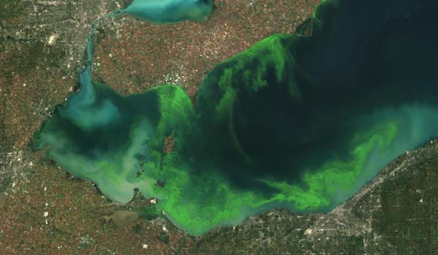 Algae spreads across Lake Erie