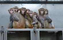 Inside an NIH primate lab