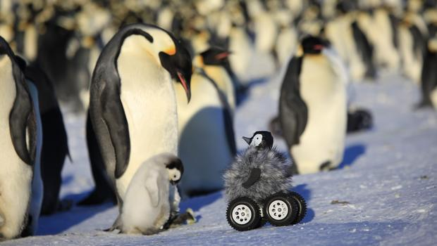 Adorable robotic penguin chick spies on colonies - CBS News