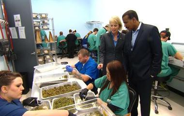 Inside the trim room of a marijuana factory