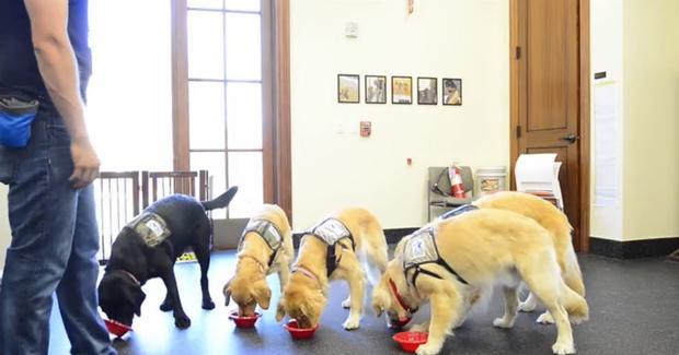 WCC-幼犬training.jpg