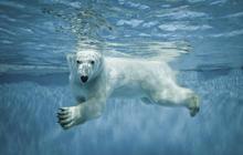 Polar bears get their special day