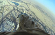 Eagle sets a world record flying from Dubai's tallest building