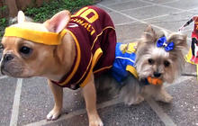 Dogs recreate Warriors-Cavaliers NBA Finals game