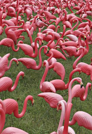 pink flamingo ap essay