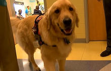 Therapy dogs help kids improve reading