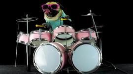 Pug plays drums to Metallica