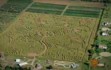 Trek through the world's largest corn maze