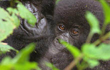 Anderson Cooper's Pick: Kings of Congo
