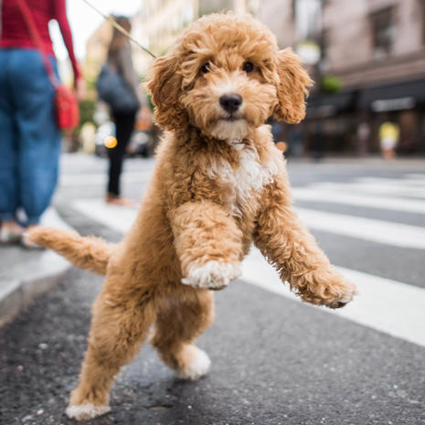 Andiamo - Pet portraits by The Dogist - Pictures - CBS News
