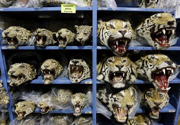 Endangered species warehouse