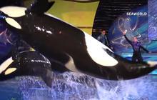 SeaWorld ending killer whale shows in San Diego