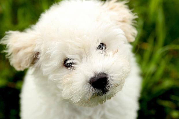 Meet Beast Zuckerberg, your new favorite dog rug