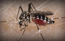 "Mosquitoes: ""The most murderous animal on Earth"""