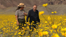 death-valley-flowers-2.jpg