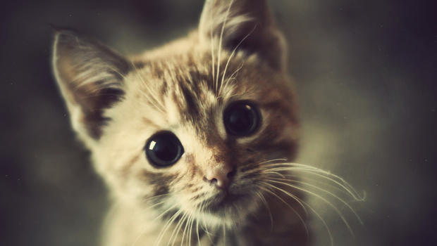 תוצאת תמונה עבור cats