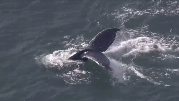 鲸鱼-2.png