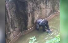 Jeff Corwin on the Cincinnati Zoo gorilla controversy