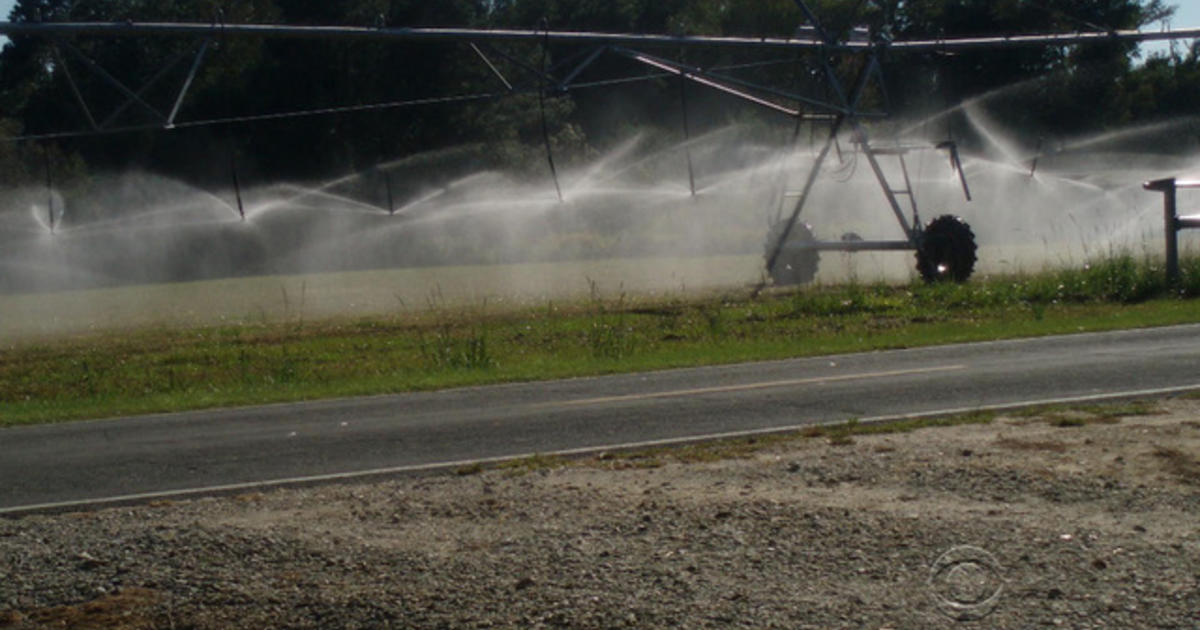 North Carolina Hog Farms Accused Of Putrid Pollution Cbs