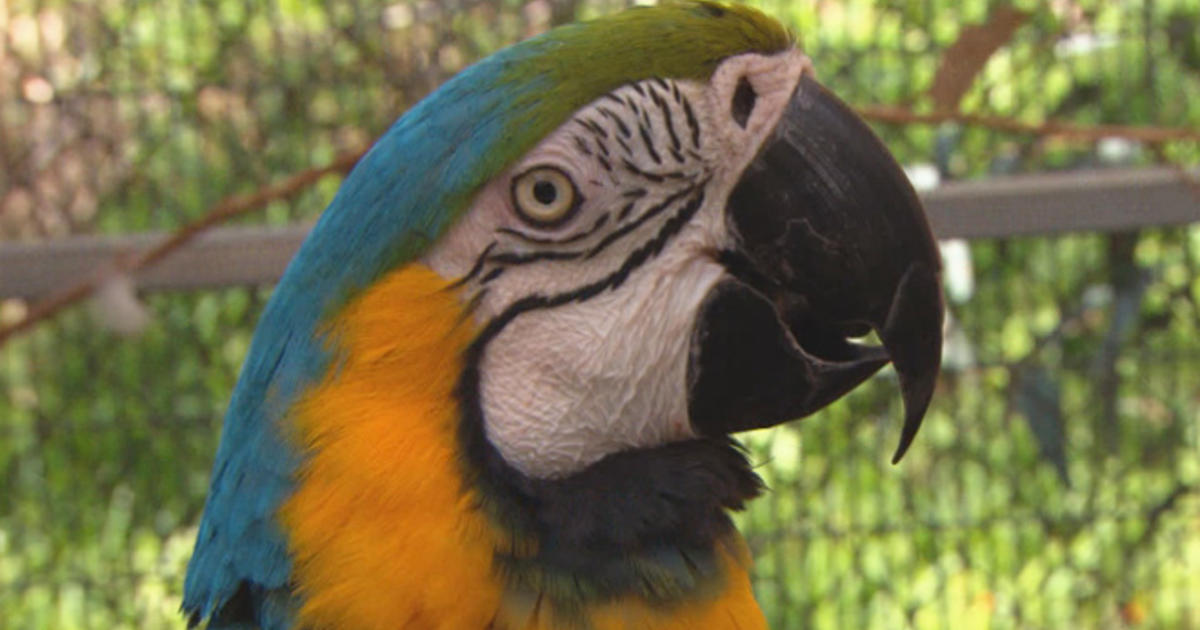 How parrots help veterans with PTSD