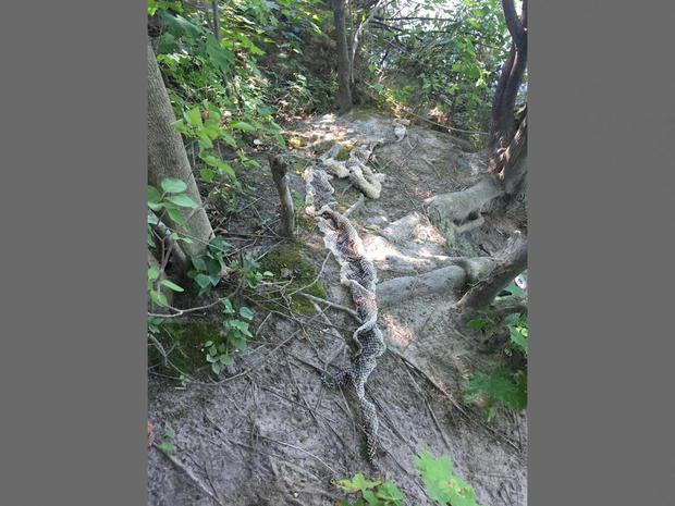 蛇皮缅因州river.jpg